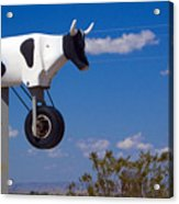 Cow Power Acrylic Print