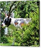 Cow Statue Acrylic Print