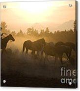 Cowboy Chasing Horses Acrylic Print