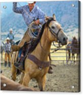 Cowboy Roping A Steer Acrylic Print