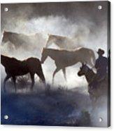 Cowboy Rounding Up Four Horses Acrylic Print
