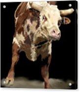 Cowboy Up Acrylic Print