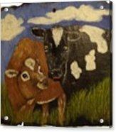 Cow's Acrylic Print