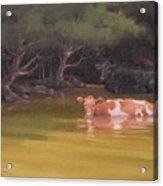 Cows Just Wanna Have Fun Acrylic Print