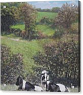 Cows Sitting By Hill Relaxing Acrylic Print