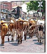 Cowtown Stockyards Acrylic Print