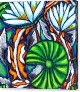 Coy Carp Acrylic Print