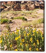 Coyote Buttes Mule's Ear Acrylic Print