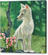 Coyote Pup Acrylic Print by Terry Lewey