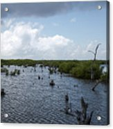 Ominous Clouds Over A Cozumel Mexico Swamp  Acrylic Print