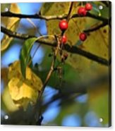Crab Apples Leaves 6498 Acrylic Print