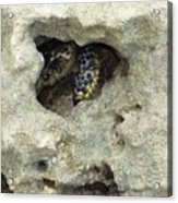 Crab Hiding In A Rock On The Seashore Acrylic Print