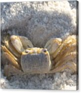 Crab On The Beach Acrylic Print