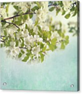 Crabapple Blossoms Acrylic Print