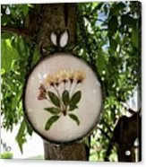Crabapple Blossoms Acrylic Print