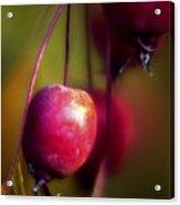 Crabapple Acrylic Print