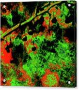 Crabapples Series #4 24 Acrylic Print