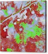 Crabapples Series #4 25 Acrylic Print