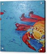 Crabs Acrylic Print