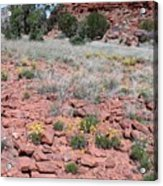 Cracked Earth And Yellow Flowers Acrylic Print