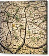 317805-cracked Mud Patterns  Acrylic Print