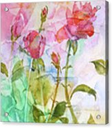 Cracklin' Rose Acrylic Print