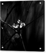 Cradle Of Ice Acrylic Print