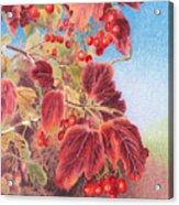Cranberry Bush In Autumn Acrylic Print by Elizabeth Dobbs