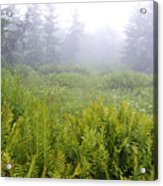 Cranberry Glades Early Morning Acrylic Print