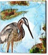 Crane In Florida Swamp Acrylic Print