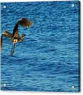Crane Lift Off Acrylic Print