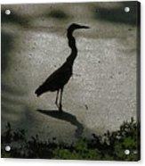 Crane Reflections Acrylic Print