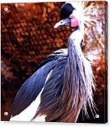 Crane Stare Down Acrylic Print