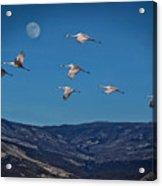 Cranes Across Colorado Blue Acrylic Print