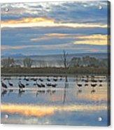Cranes At Dawn 1 Acrylic Print