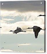 Cranes At Dawn 2 Acrylic Print