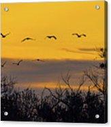 Cranes In The Sunrise Acrylic Print