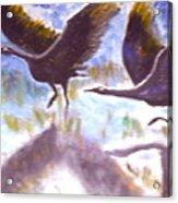Cranes N Flight Acrylic Print