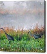 Cranes On Foggy Day Acrylic Print