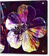 Cranesbill Flower Close Bee Insect  Acrylic Print