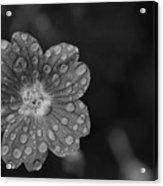 Cranesbill Geranium In Black And White Acrylic Print