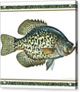 Crappie Print Acrylic Print by JQ Licensing