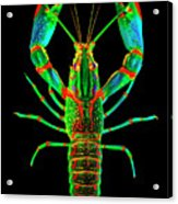 Crawfish In The Dark - Orivibsat Acrylic Print