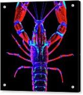 Crawfish In The Dark-  Redblue Acrylic Print