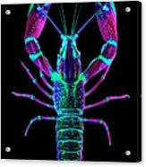 Crawfish In The Dark - Rosegreen Acrylic Print
