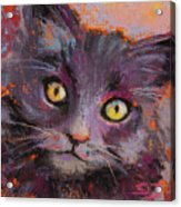 Crazy Cat Black Kitty Acrylic Print