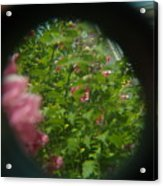 Crazy Floral Three  Acrylic Print