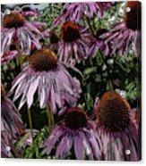 Crazy Flowers Acrylic Print