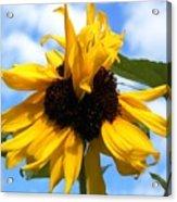 Crazy Sunflower Look Acrylic Print