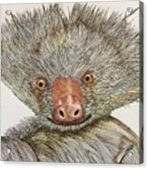 Crazy Two Toed Sloth Acrylic Print